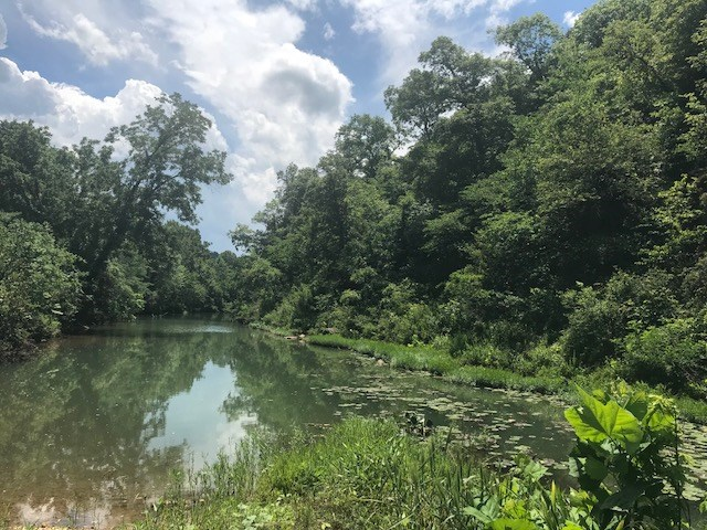 Sharp County, AR Hunting Land with Creek Frontage For Sale