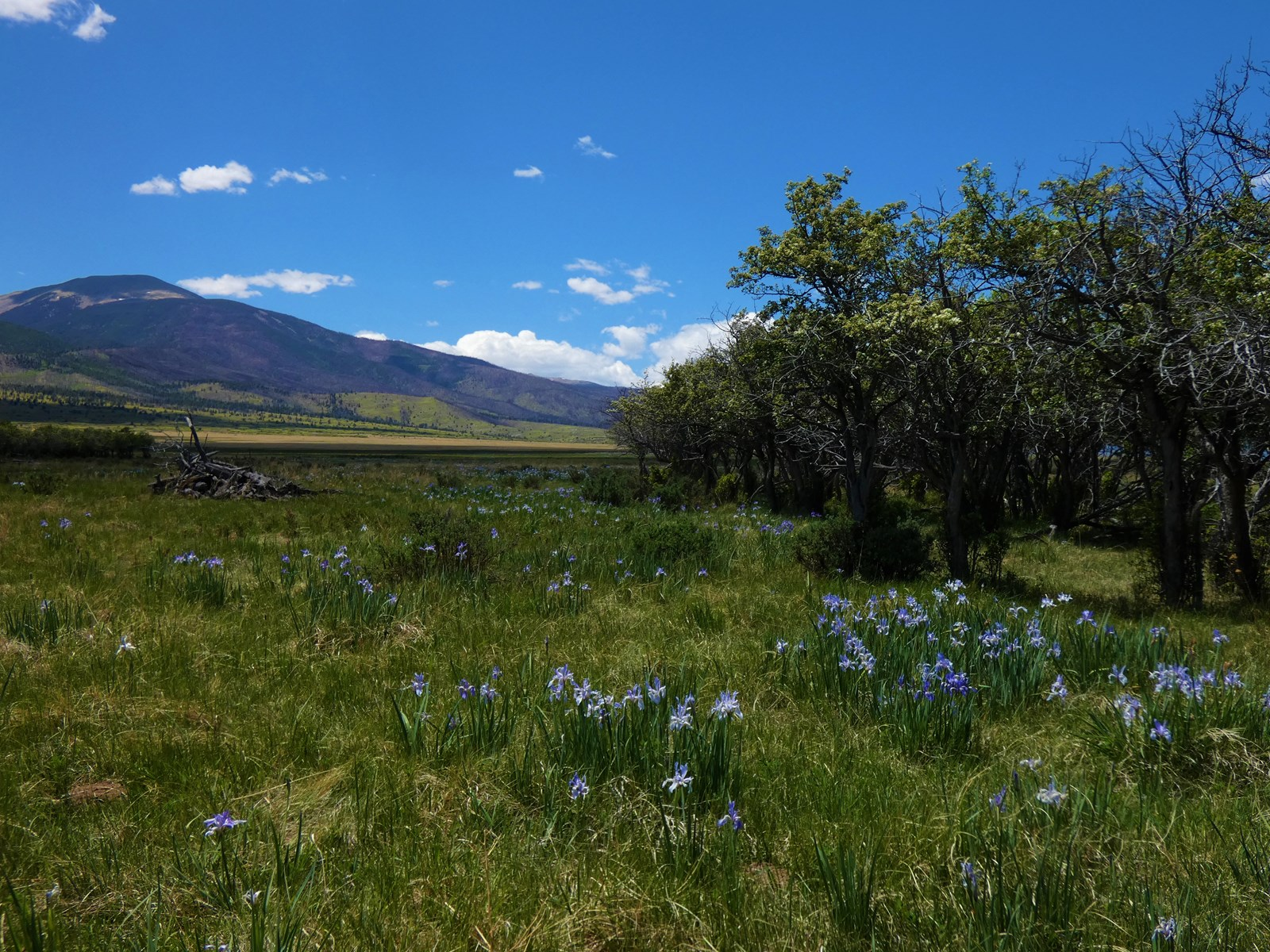 Springtime at Maytag Mountain Ranch