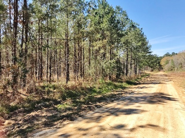 370 Acres Hunting Timber Land for Sale Wilkinson County, MS