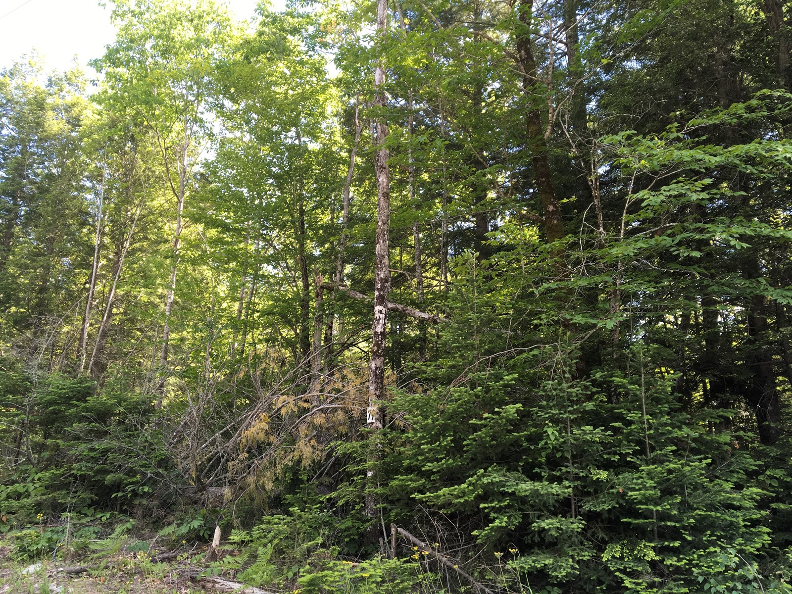 Maine Land for Sale in Orono
