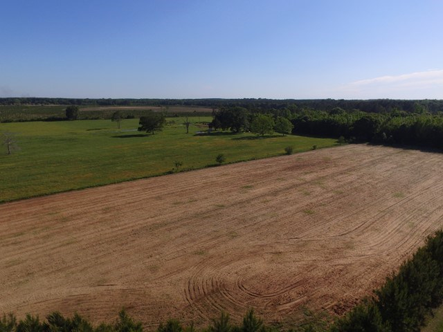 North Florida farmland for sale.  Gently sloping land