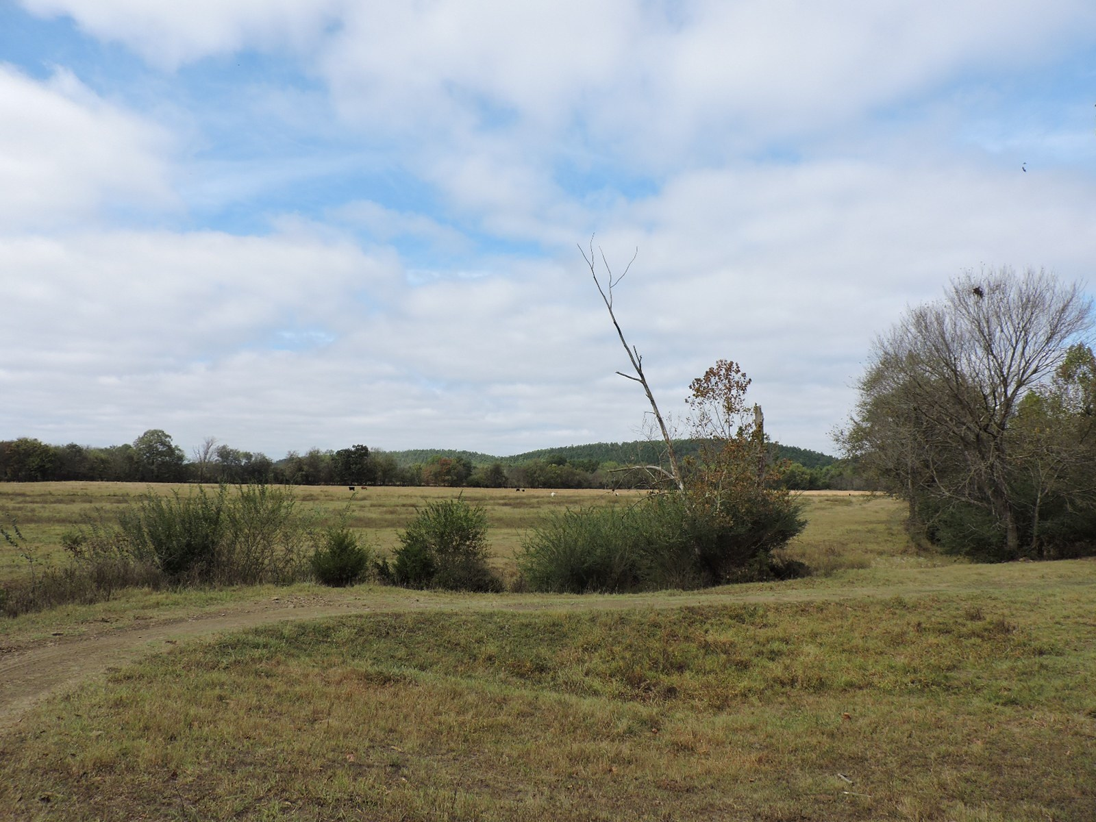 Cattle Ready Farm Land