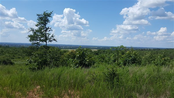160 Acre Timber Investment and Hunting Property on Sugar Loa