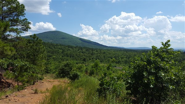80 Acre Timber Investment and Hunting Property on Sugar Loaf