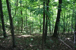 PIEDMONT MO LAND FOR SALE 40 ACRES
