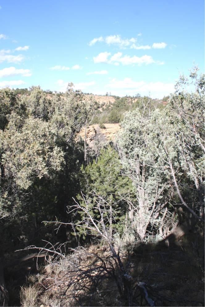 Land for sale near El Vado Lake with Mountain Vistas,wildeli