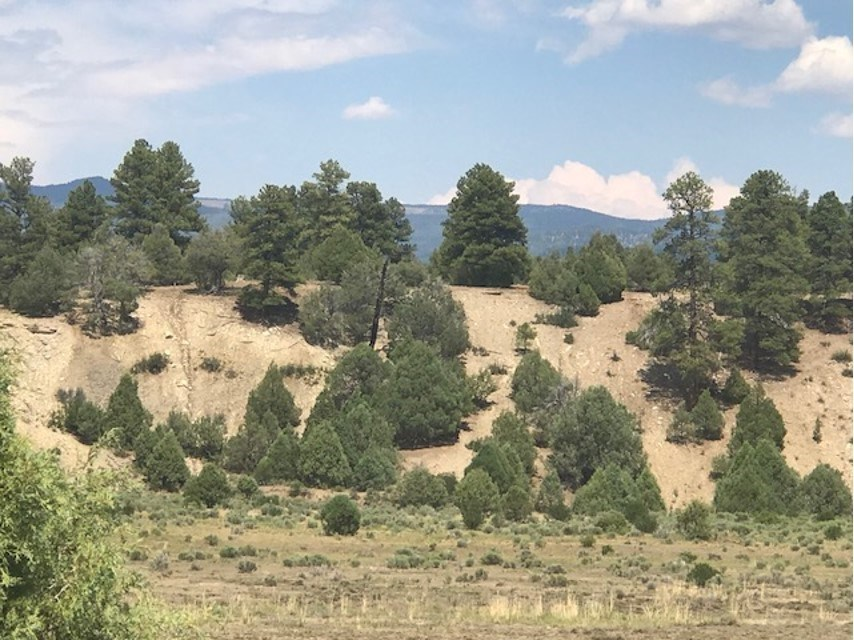 Land for sale with great Building Sites west of Chama NM