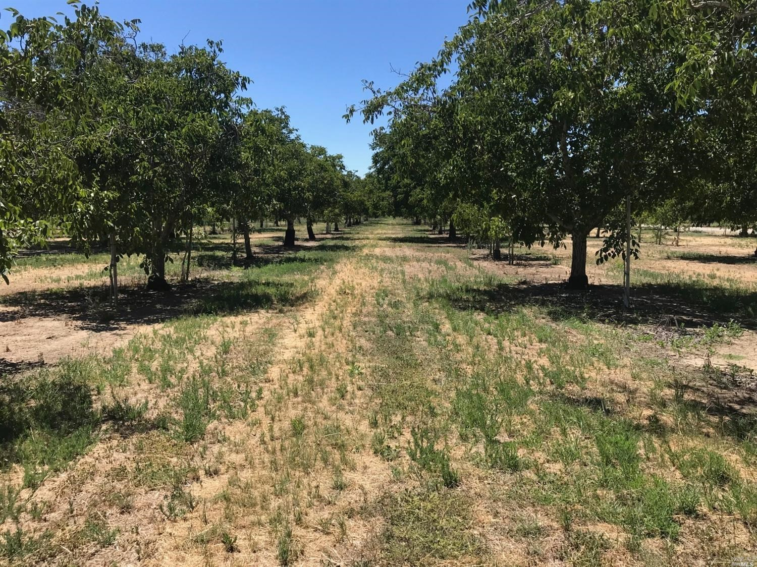 Dixon, Northern CA Walnut Orchards For Sale