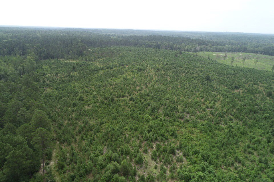 Saxon Estate Land Sale 08/16/2018 - 2014 Young Planted Pine