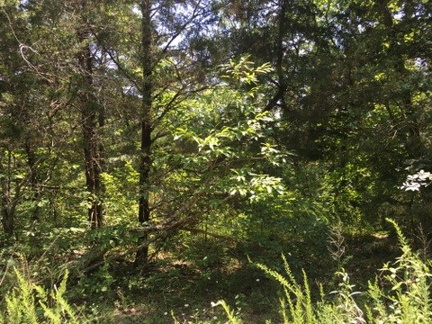 Wooded, Acreage, Hunting, Edmonton, KY, Metcalfe County