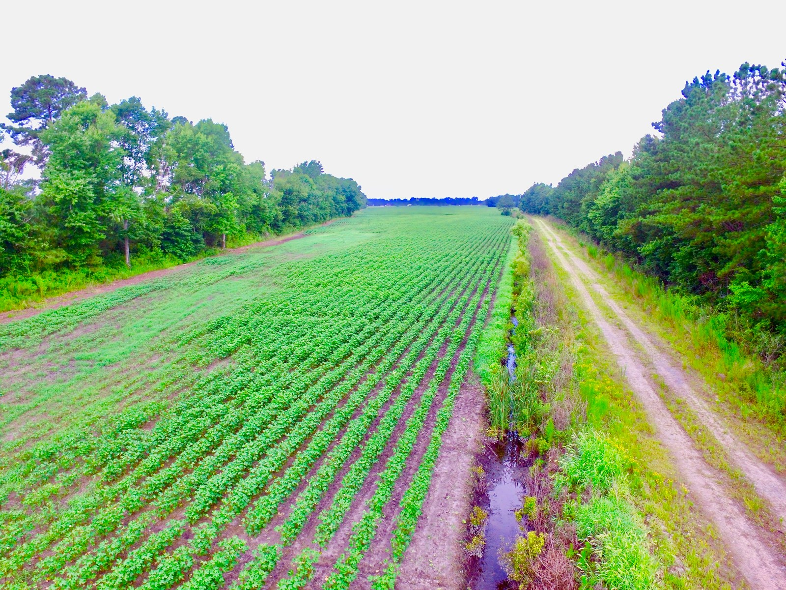 Farmland For Sale in Washington County, NC/Plymouth, NC