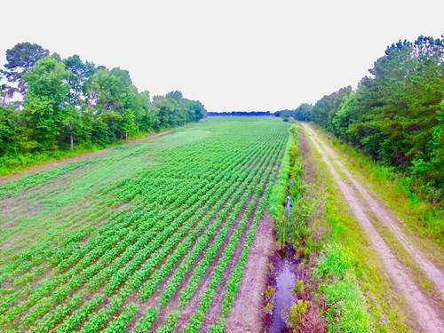 Farmland For Sale in Washington County, NC/Plymouth, NC