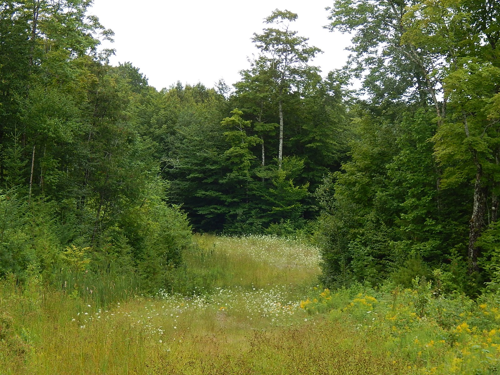 Recreational Land For Sale | Springfield, Maine