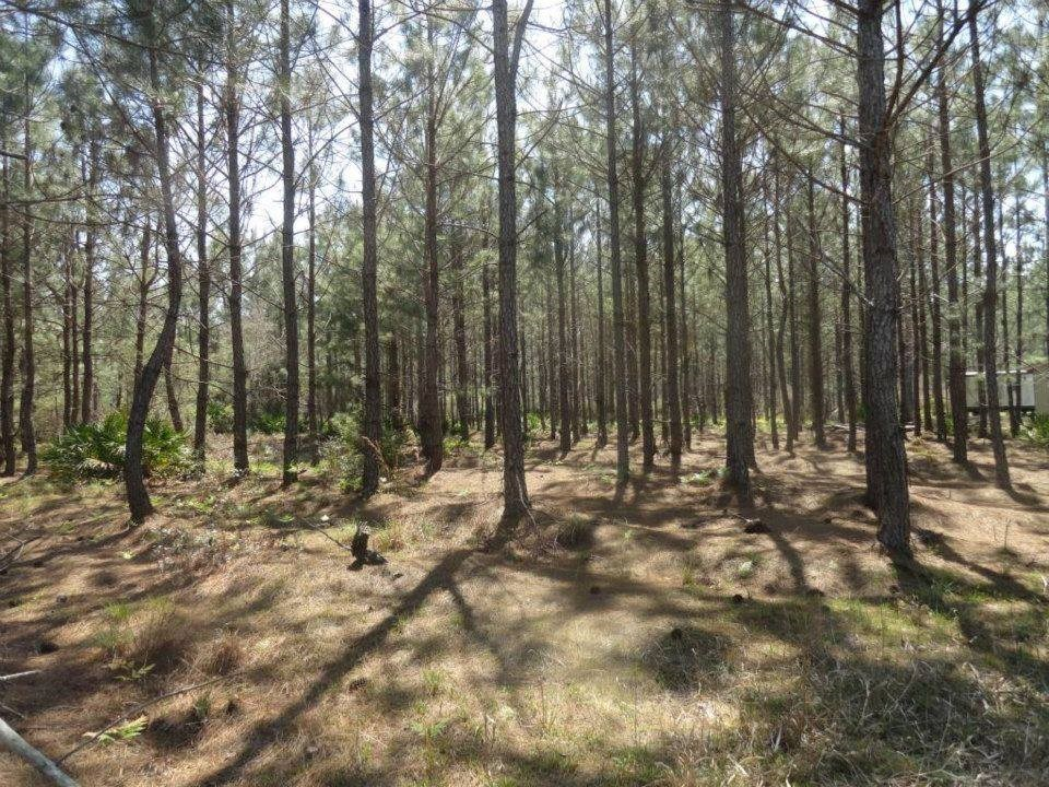 PRIME HUNTING PROPERTY! 46 acres in Levy County Florida