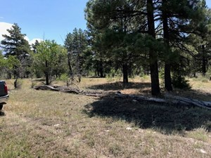 LAND FOR SALE SOUTH OF CHAMA NM NEAR BRAZOS CLIFF