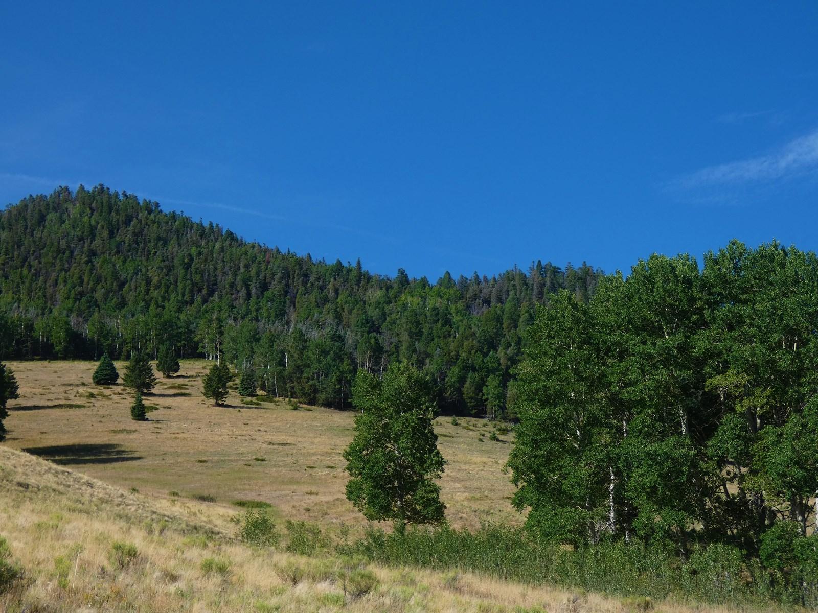 Aspen Groves Throughout