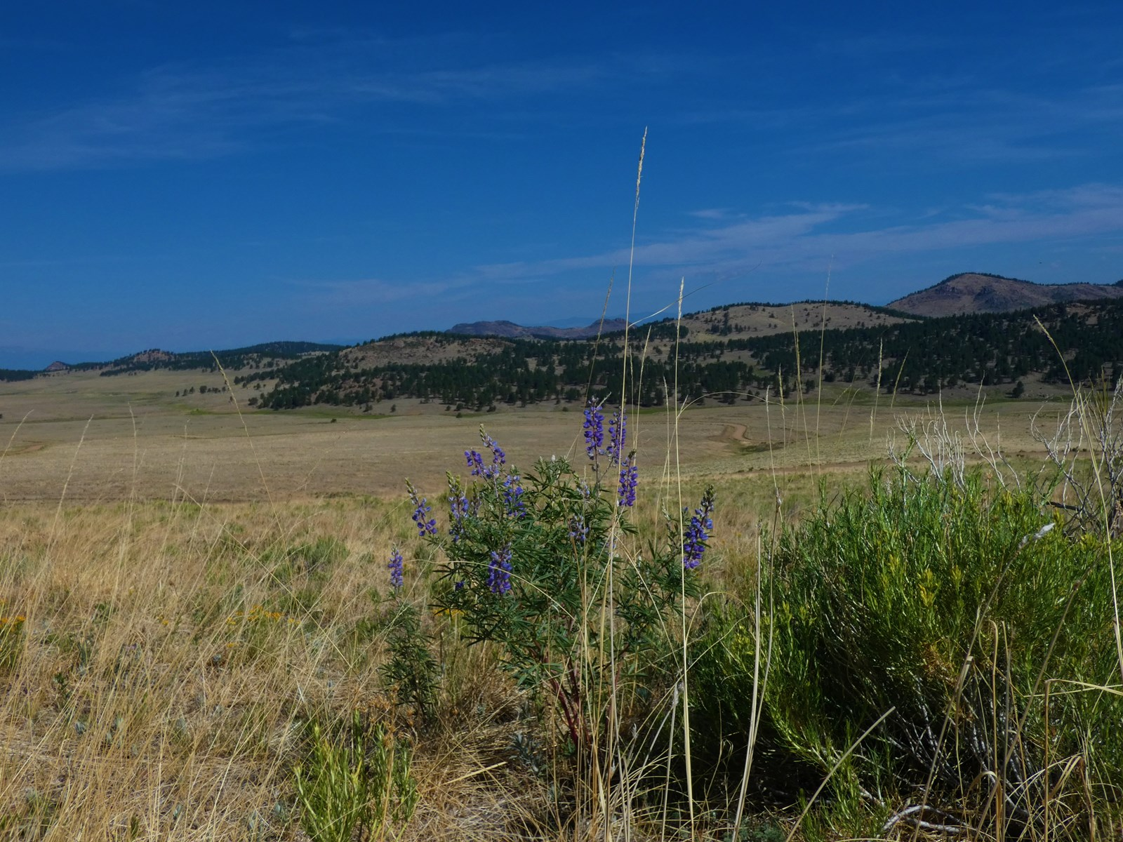 Wildflowers & Sage