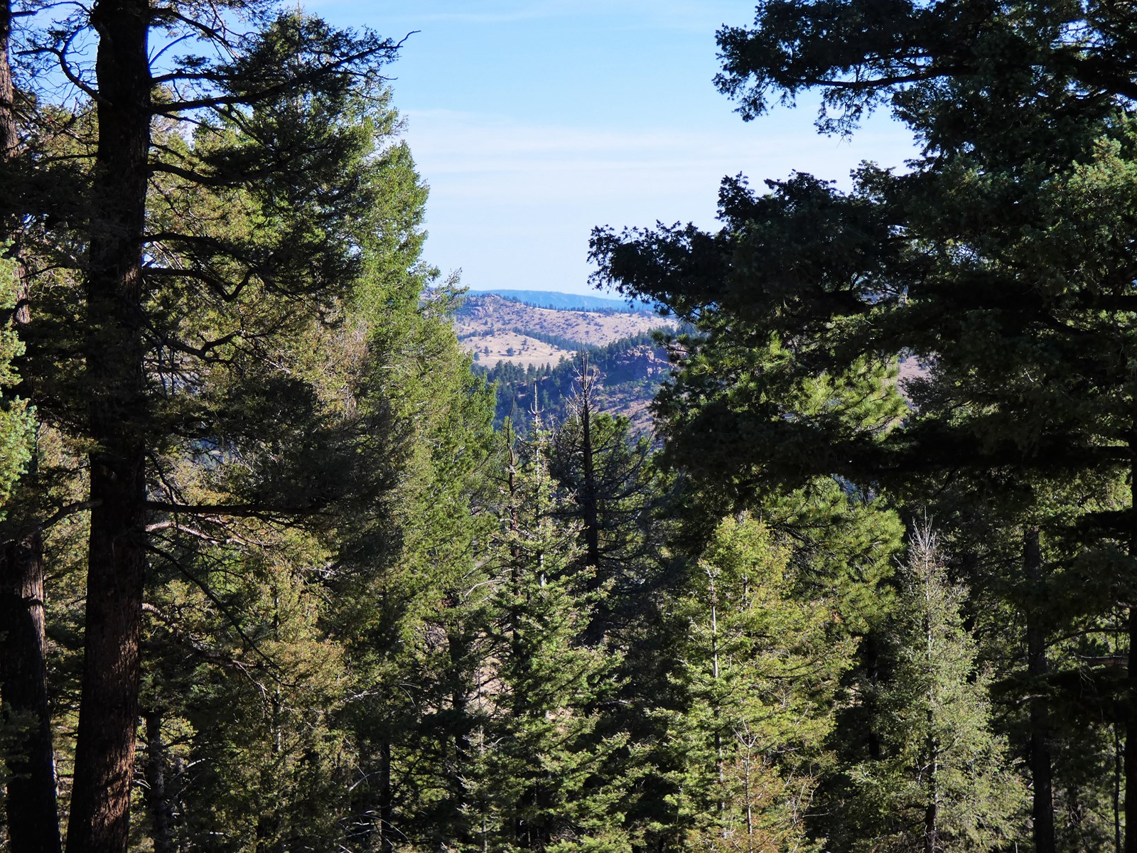 View Through the Pines