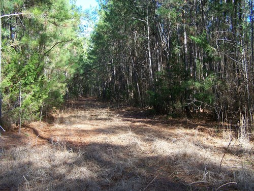 108.53 Wooded Acres with Pond & 2 BR Cottage in Ridgeway, SC