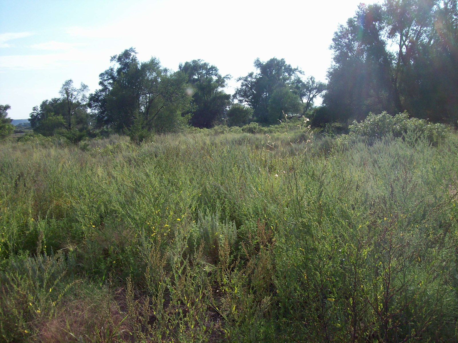 Land For Sale in Freedom OK! Woods County