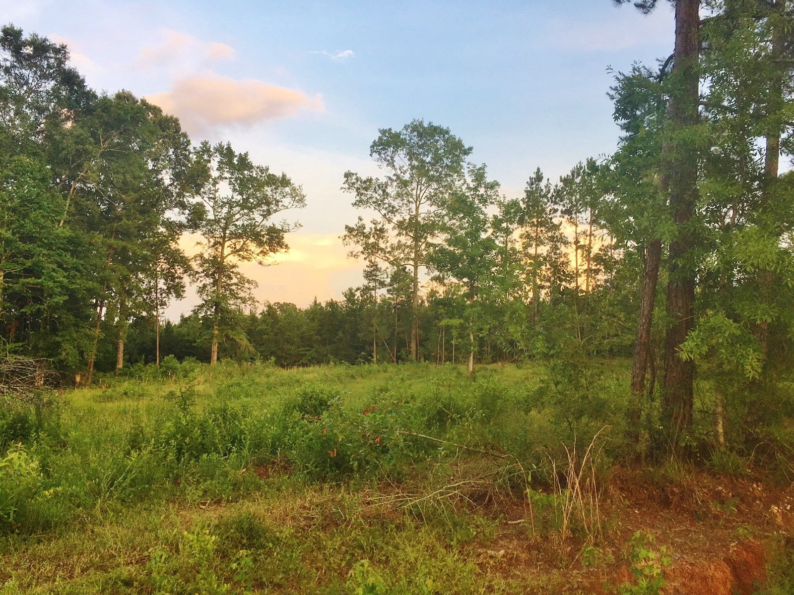 37 Acres Land for Sale Gloster, Amite County, MS