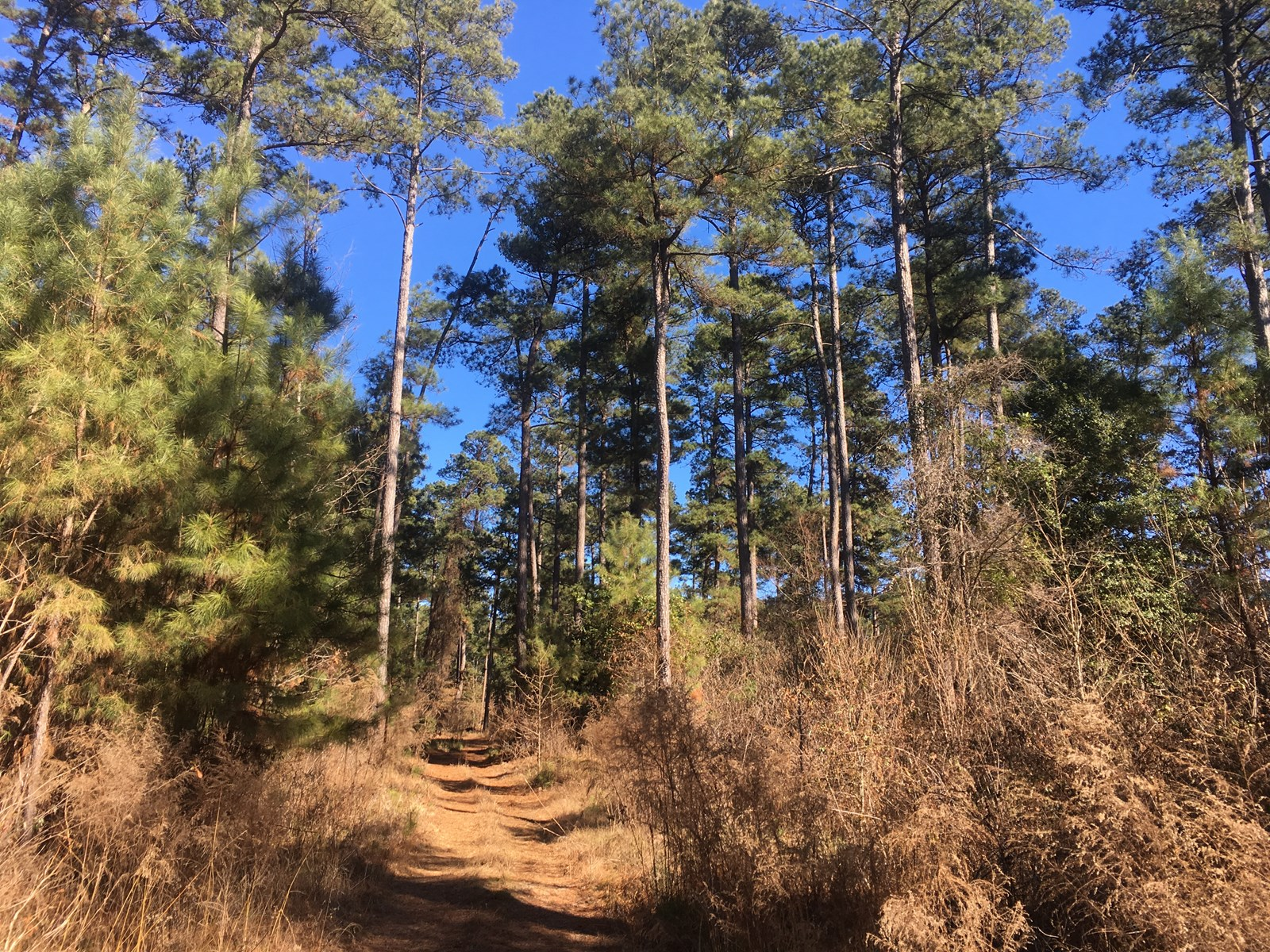 Union County Timberland and Mineral Rights for Sale 09/20/18