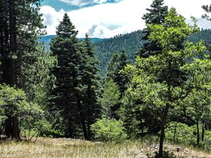 CHAMA NM MOUNTAIN LAND FOR SALE WITH ACREAGE IN BRAZOS