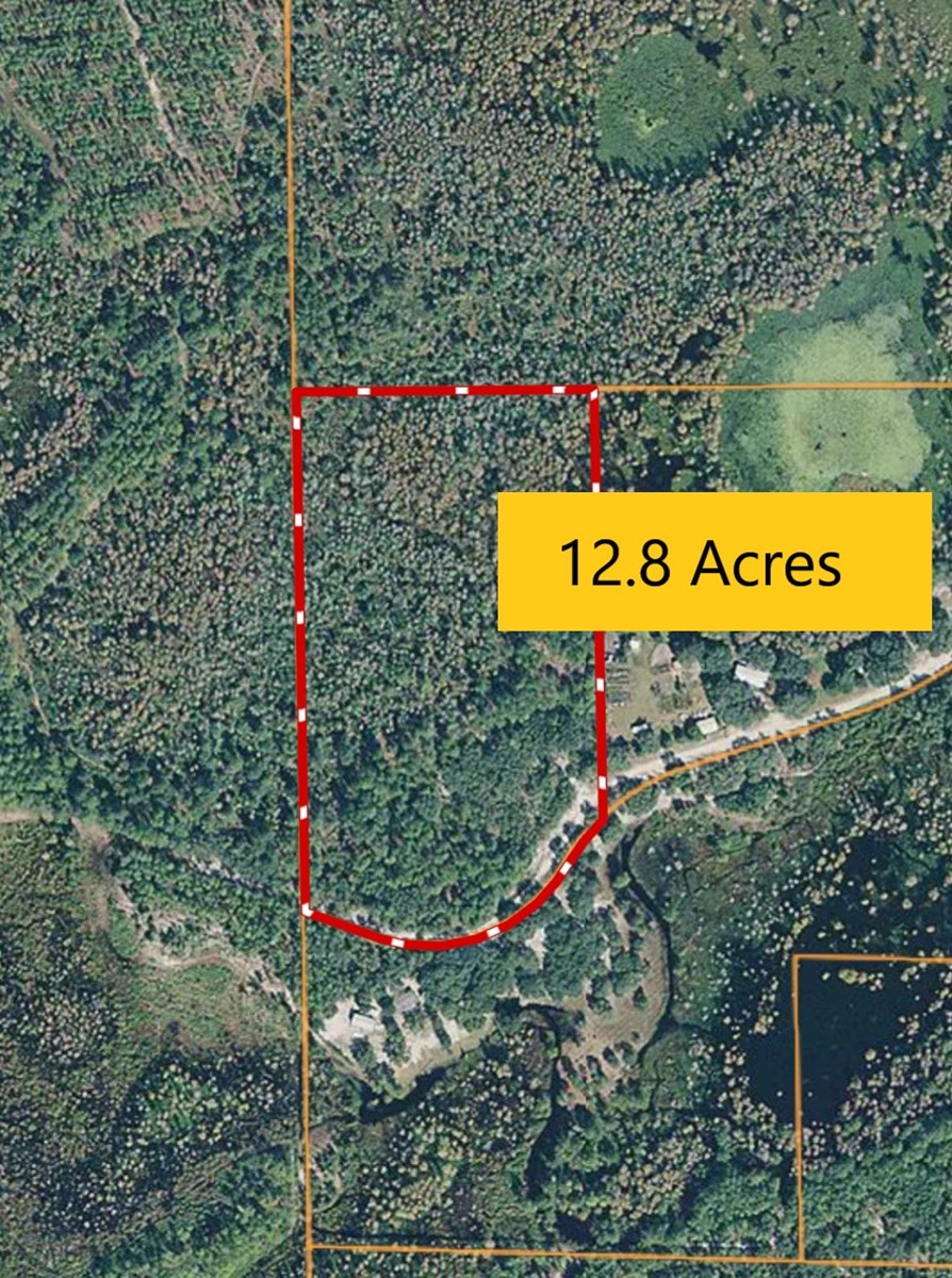 WOODED ACREAGE IN TRENTON, FLORIDA