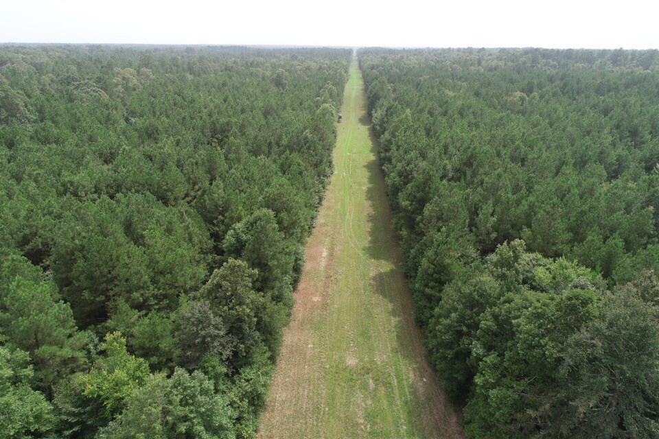 Young Pine Timber Land for Sale in Calhoun County, Arkansas