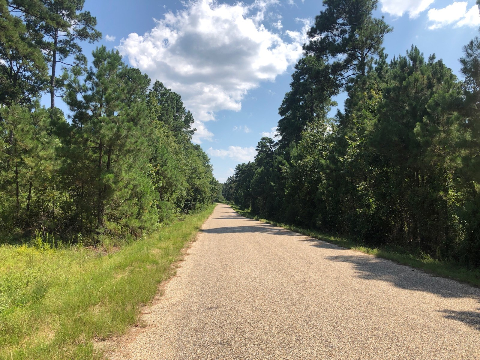 Pine Timber Land Home Potential Near Hampton, AR For Sale