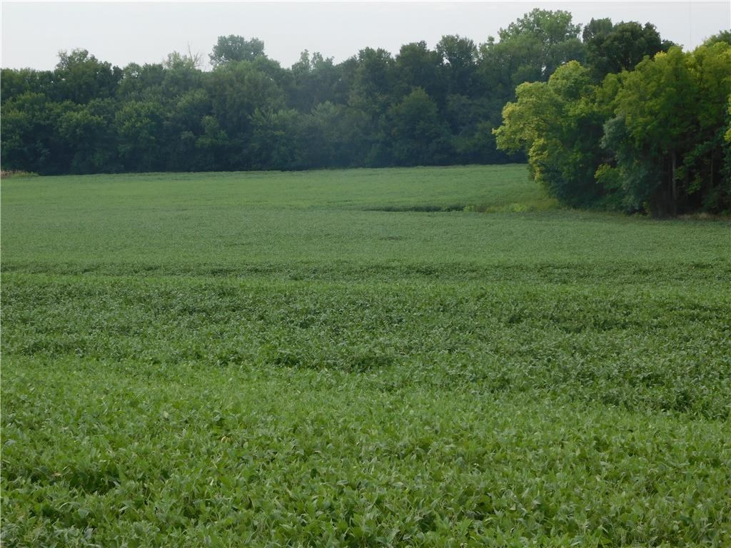 Land For Auction -  Row Crops -  Pasture