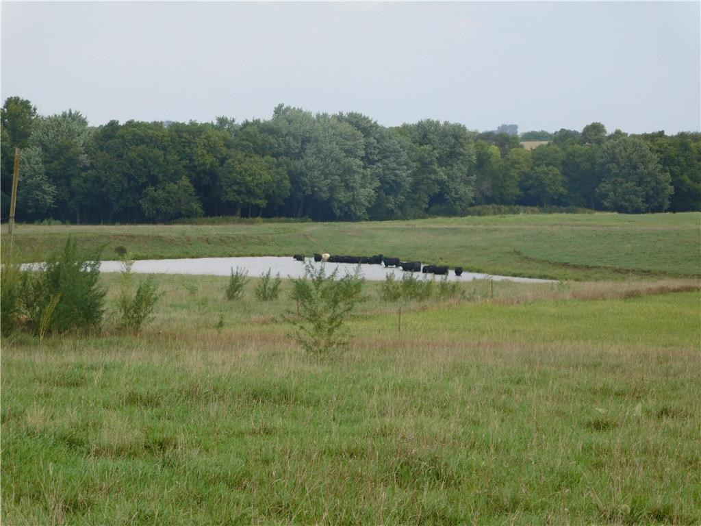 158 Acres For Auction - Tillable Acres - Pasture - Timber