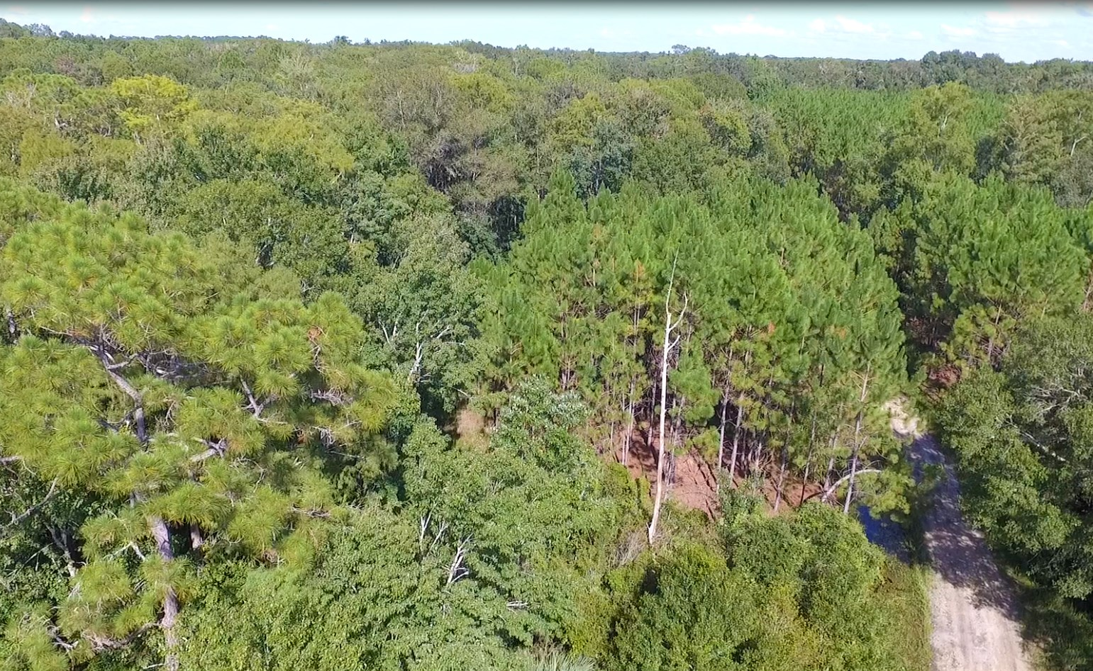 INVESTOR ALERT-2015 Acres Timberland/Hunting - Chiefland, FL