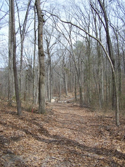 4.84 Mountain Acres in the Heart of the Ouachitas