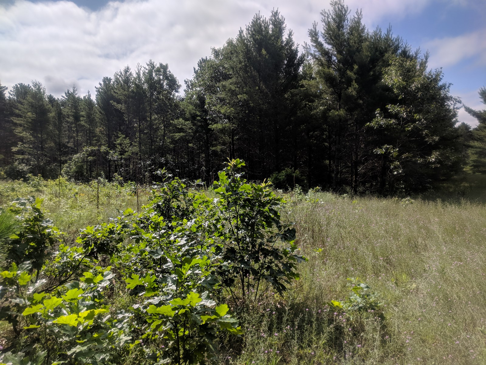 Wooded Land for sale Almond, WI
