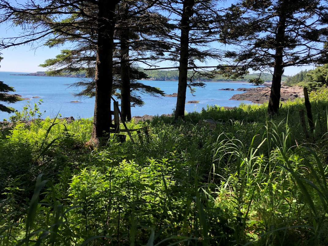 Coastal Land Lot For Sale | Trescott, Maine