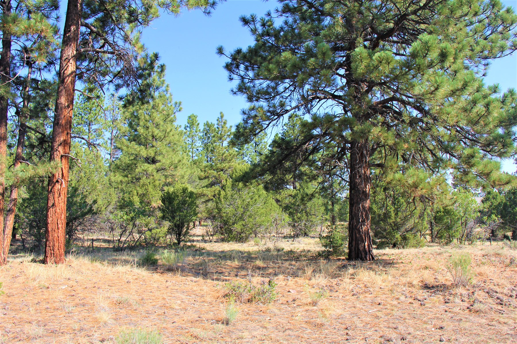 Golf property located lot located in Western Colorado