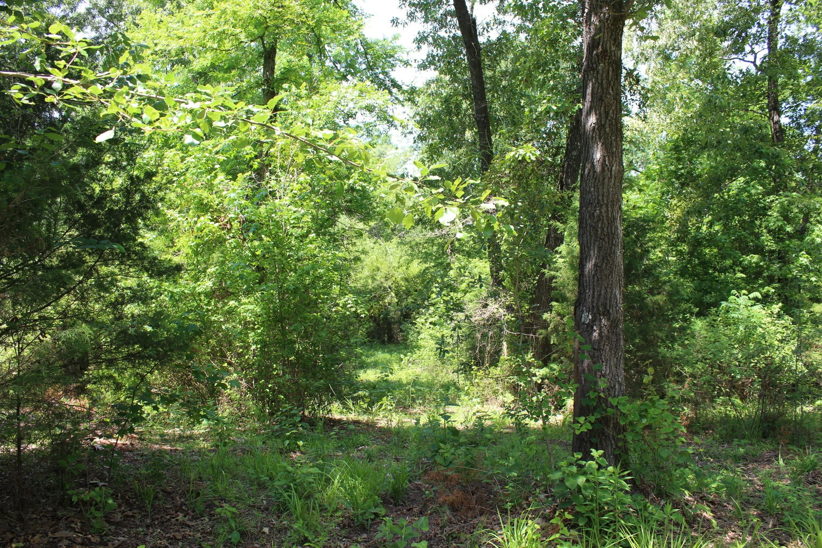 30 PLUS ACRES IN WOOD COUNTY TEXAS FOR SALE