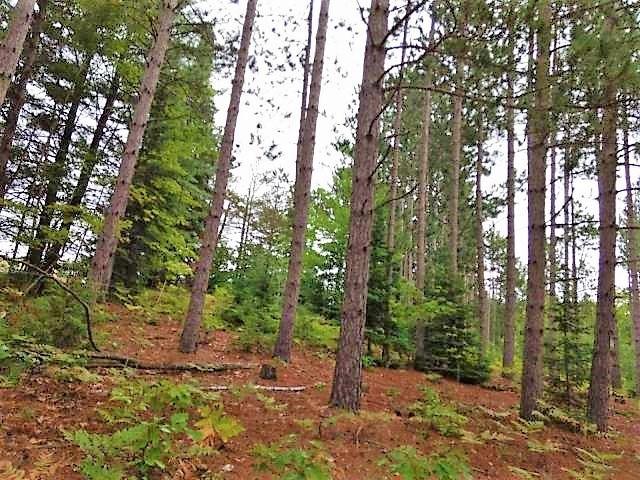 0.50 Acre Hunting Property Near Atlanta MI