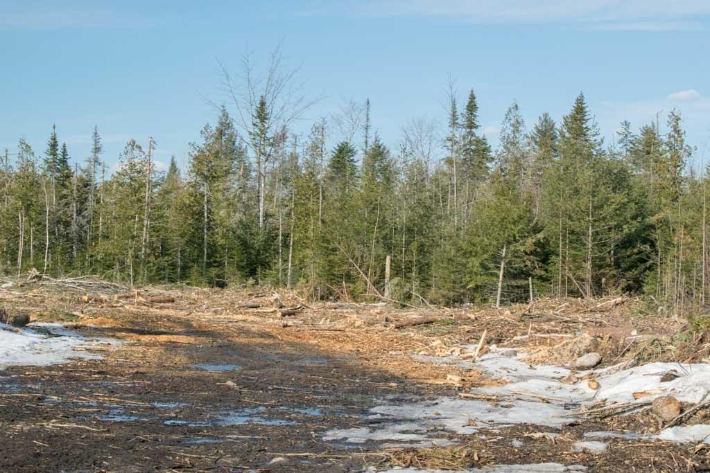 Maine Land for Sale in Palmyra
