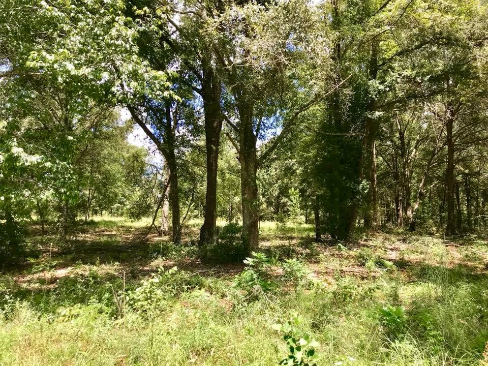 10 ACRES FOR SALE IN O'BRIEN - Suwannee County Florida