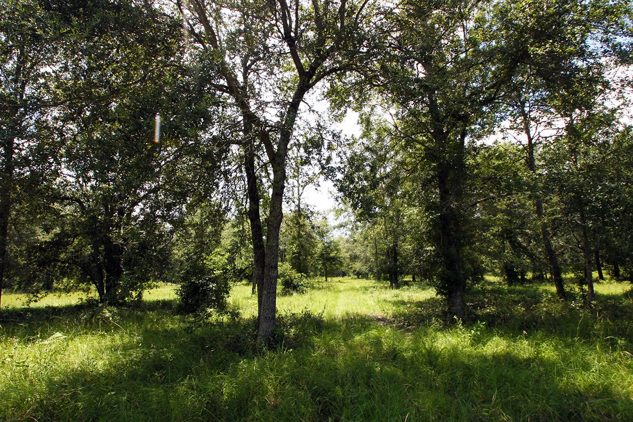 5 ACRES FOR SALE IN LIVE OAK, FL