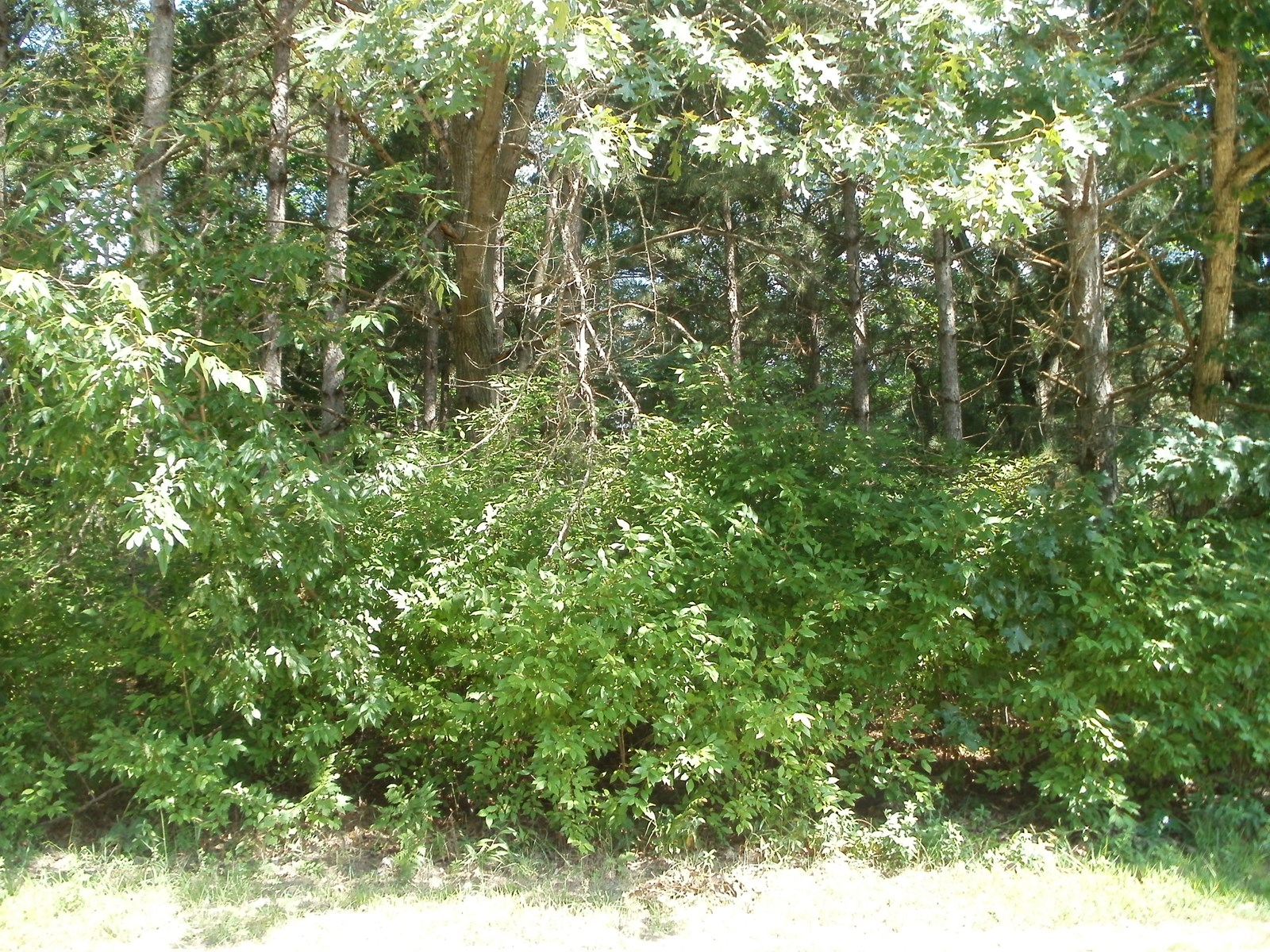 Vacant Land Bring Your Own Builder Portage WI