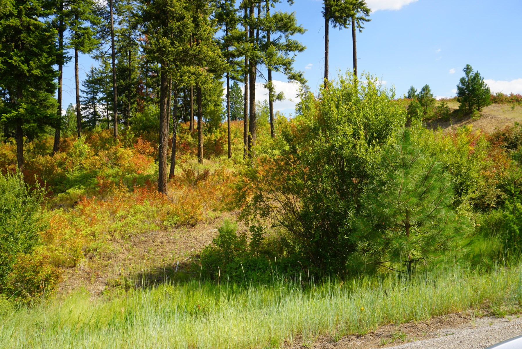 10 acre View Property in Mead, WA overlooking Peone Prairie!