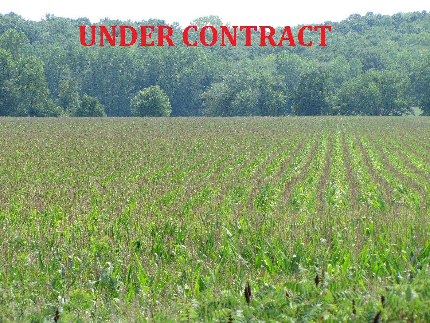 MISSOURI FARMLAND FOR SALE, ROW CROP FARM, HUNTING, INCOME