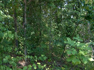 BUILDING LOT, LAKE PROPERTY IN TN, LAKE ACCESS, RECREATIONAL