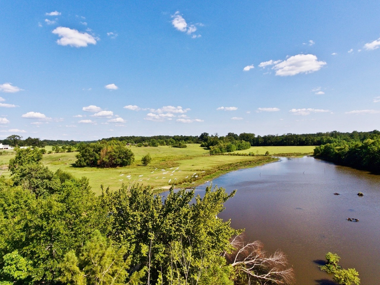 160 Acre Cattle and Recreation Land for Sale Minden, LA