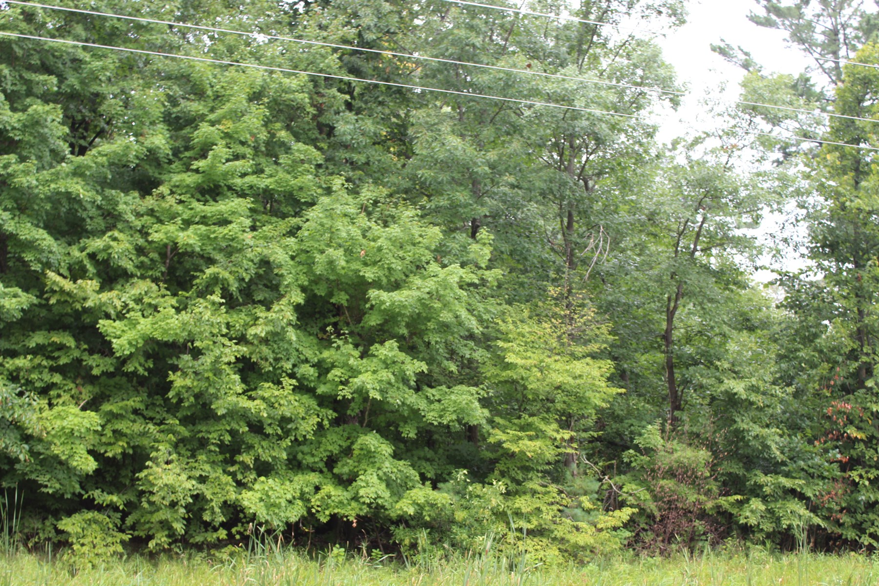 Heavily Wooded Parcel For Sale Foley