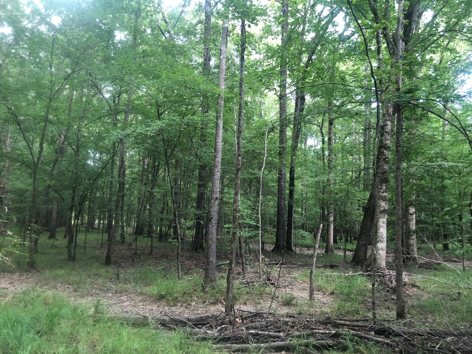Hardwood Creek Bottom Hunting Land For Sale in Columbia Co.