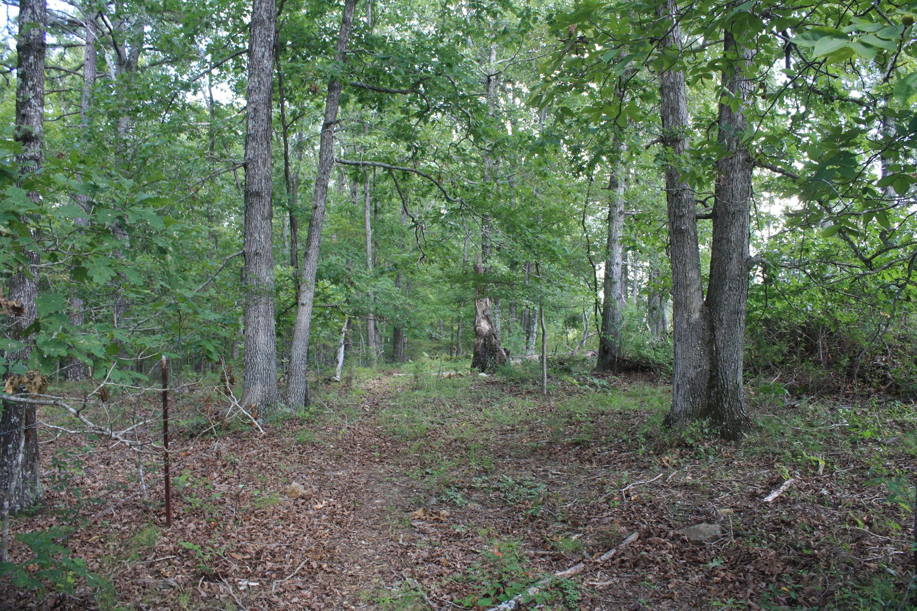 Wayne County Missouri Land For sale 317 acres